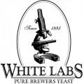 White Labs blautger
